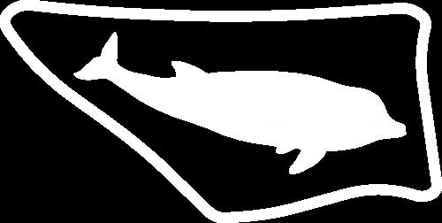 dolfijnw-