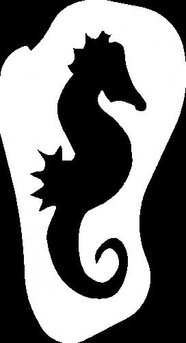 zeepaardw+